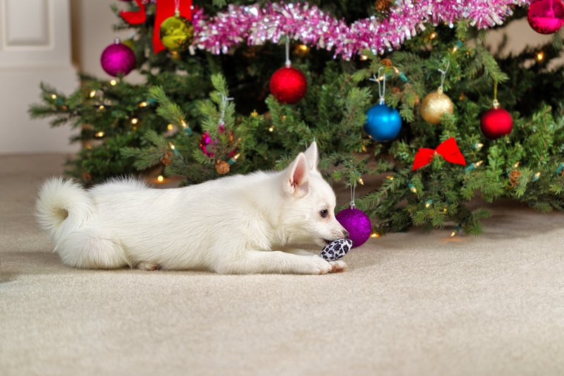 Christmas Carpet Cleaning.Home M M Carpet Cleaners 719 539 4122